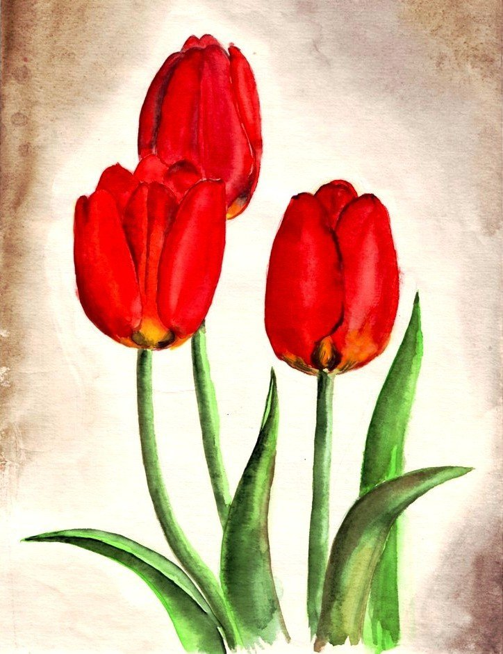 уже картинки рисунки тюльпанов каталог лучших недорогих