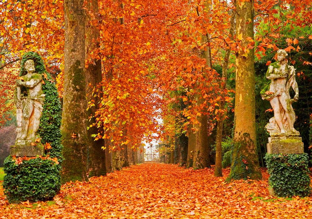 например, осенний листопад картинки профильной