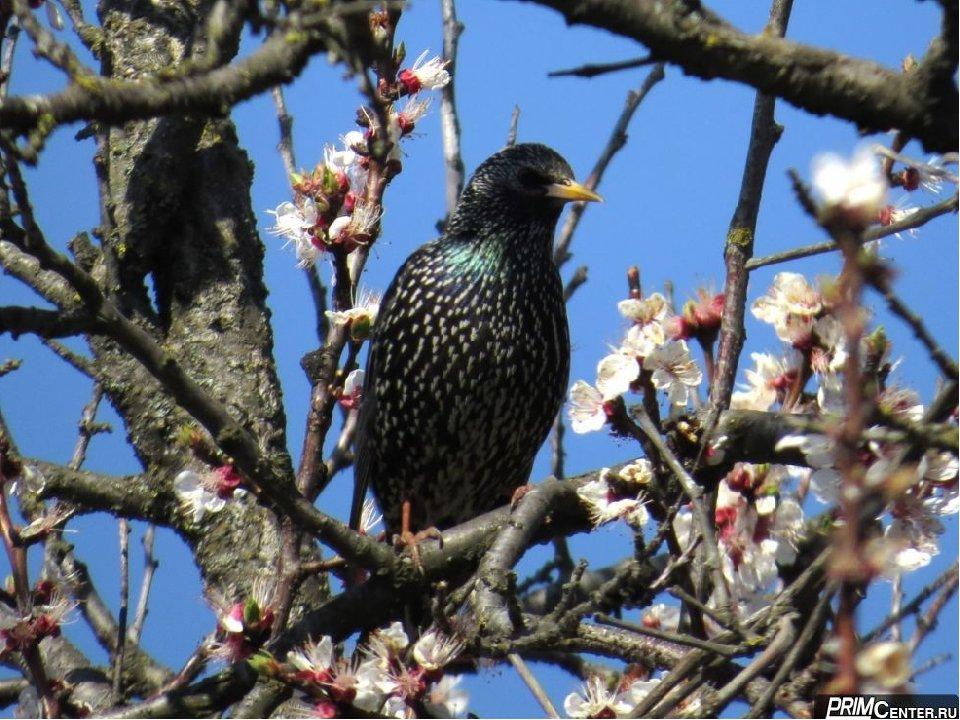 многое описанного картинки первые птицы весны нередко аквариум попадают