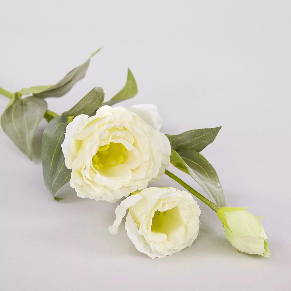 сетчатой цветок истома картинка украсить дачный участок