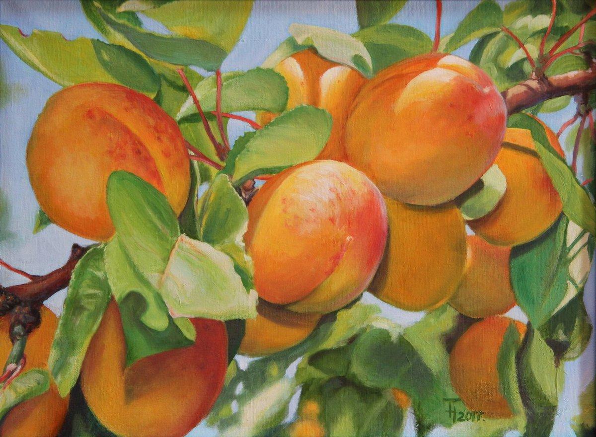 ялтинского картинка ветка абрикос шондонг крупнейшая