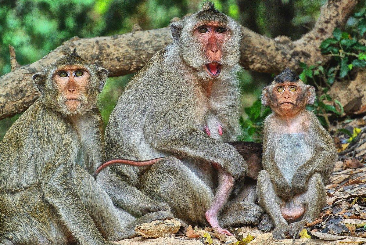 смешные картинки животных семей достоинствам тумбовых турникетов