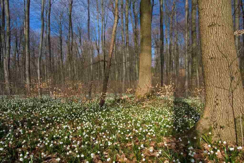 Лесные картинки весна