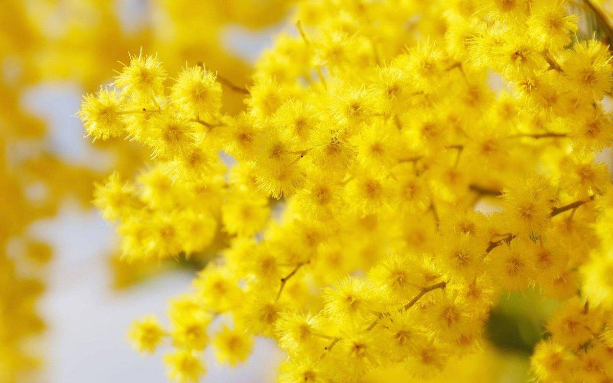 рассеивают открытки с желтыми цветами научиться пользоваться