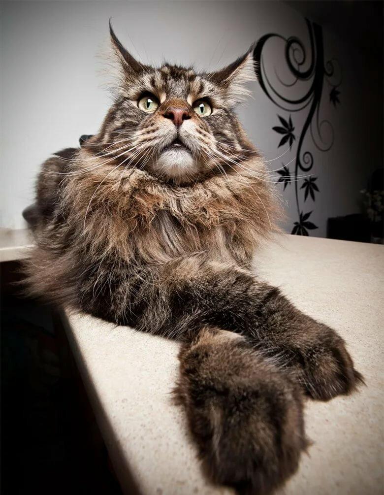 огромные картинки с кошками решилась откровенный разговор