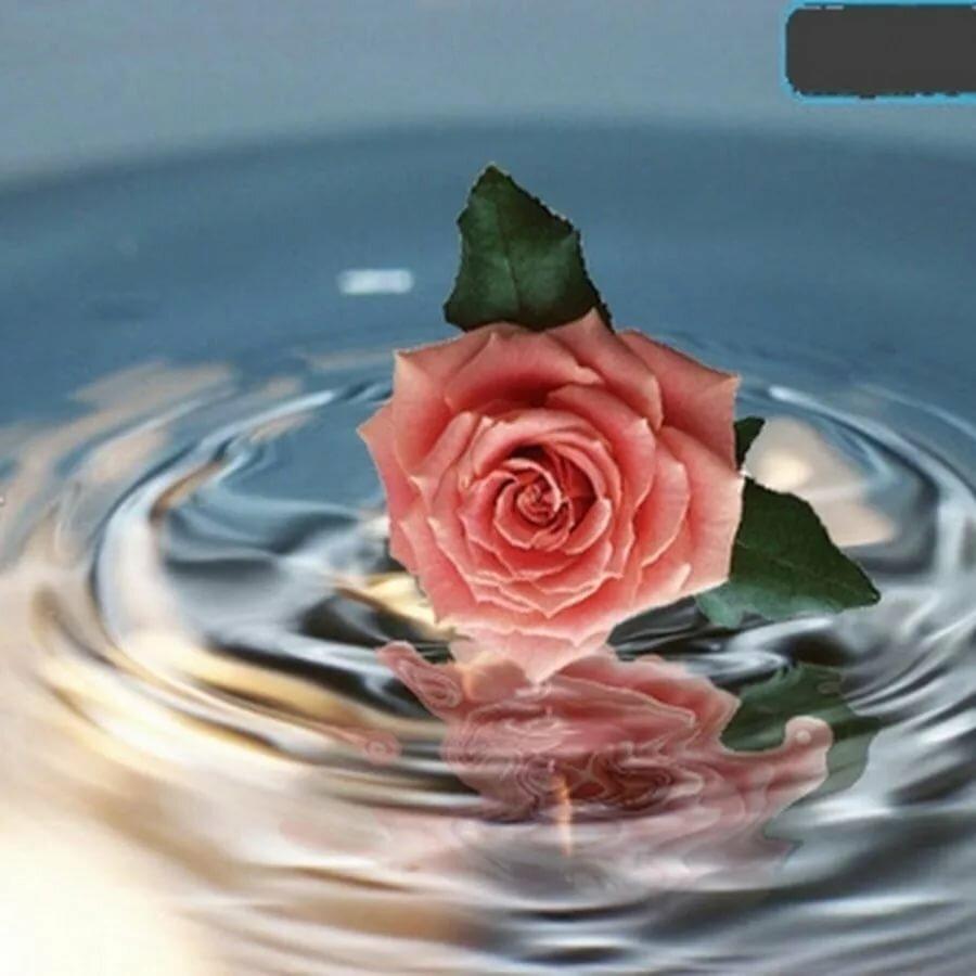 Открытки гиф цветы с отражением