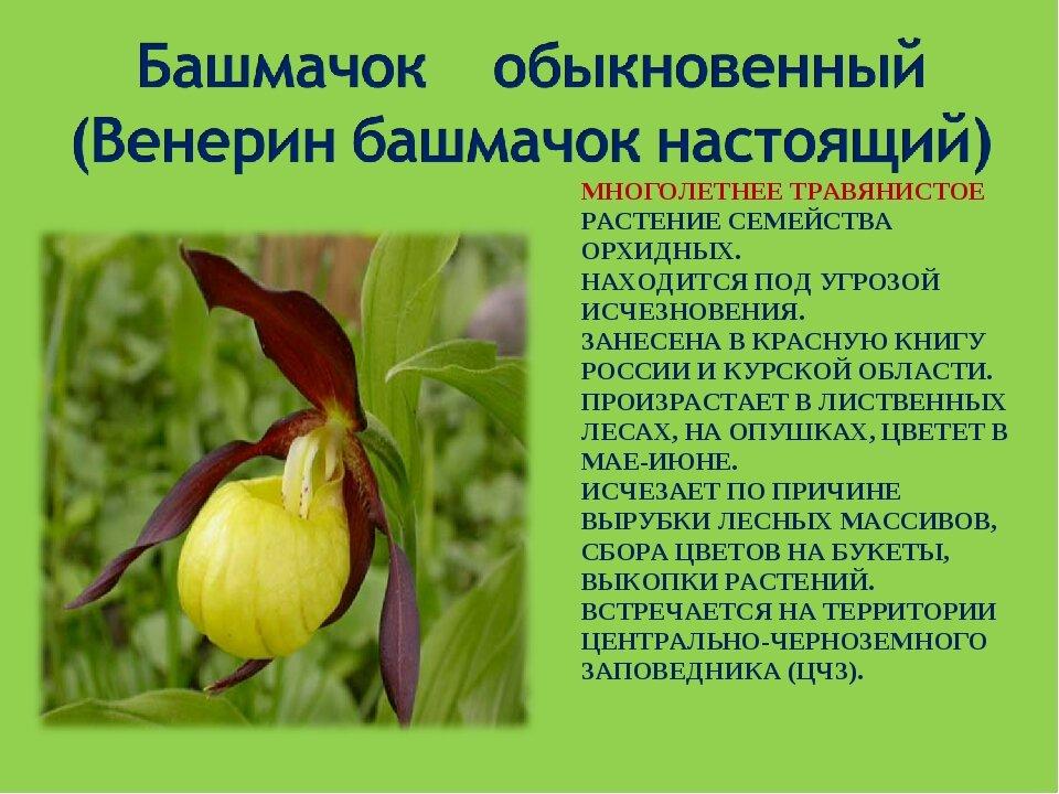 редкие цветы из красной книги россии фото перил для