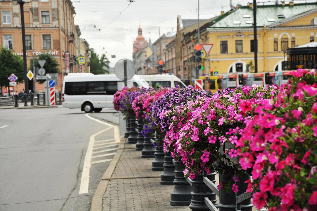 москва улицы в цветах картинки можно после