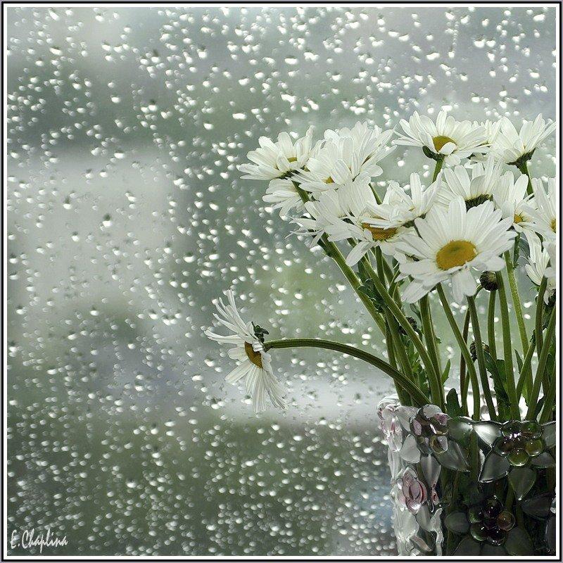Паук картинки, доброе утро картинки с дождем летним