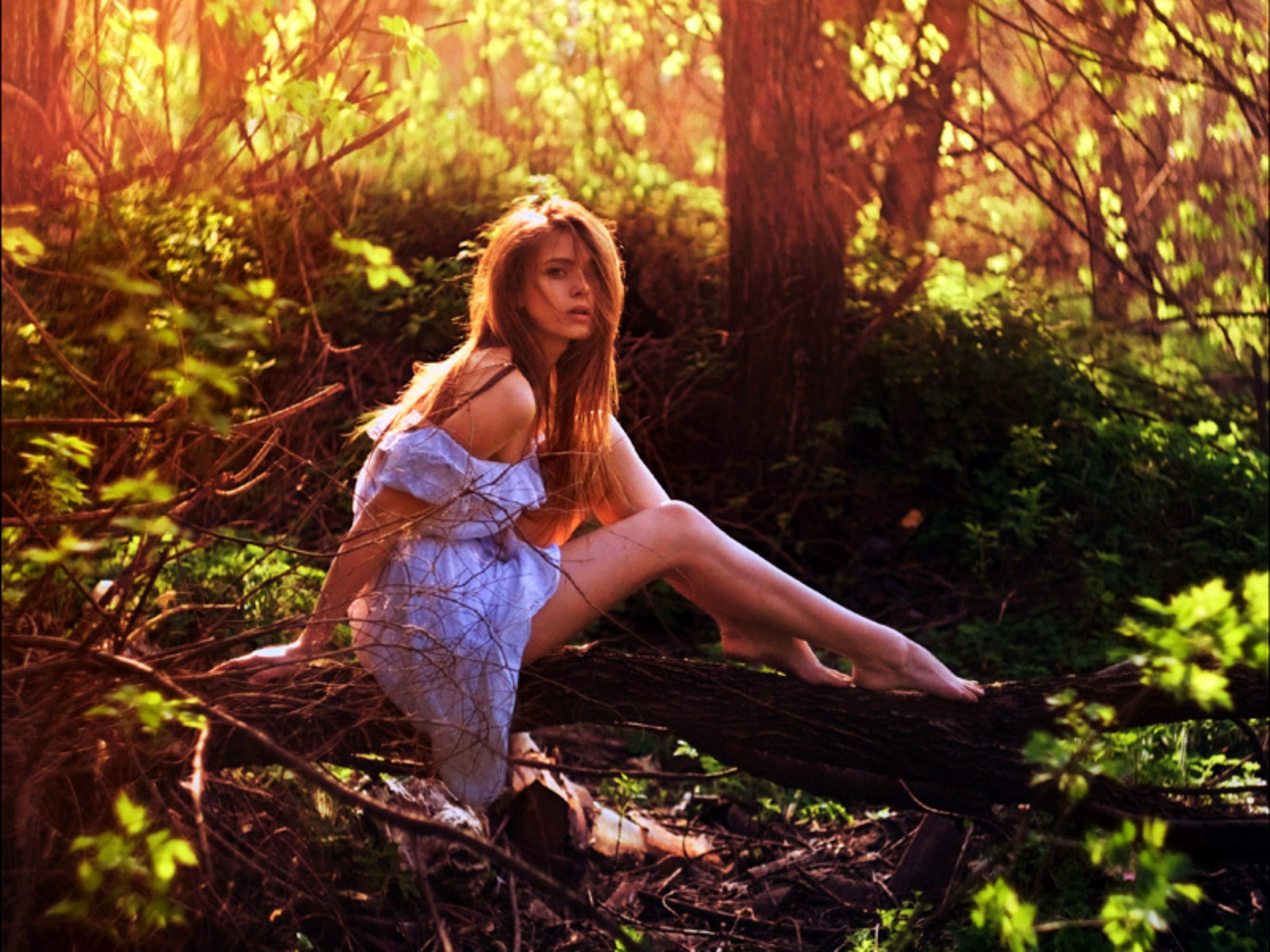 в лесу фото летом