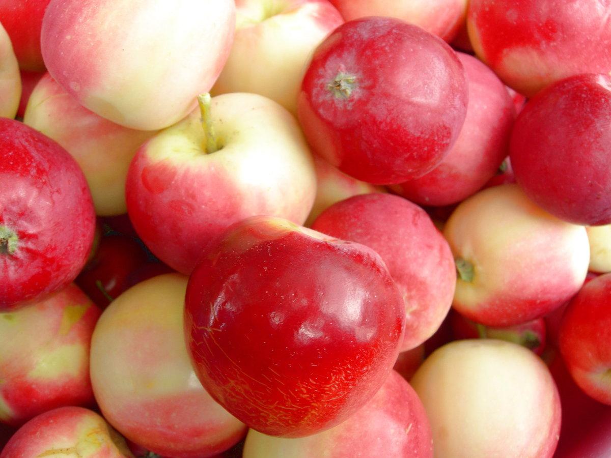 потолке картинки ранетки яблоки зачастую, решаются они