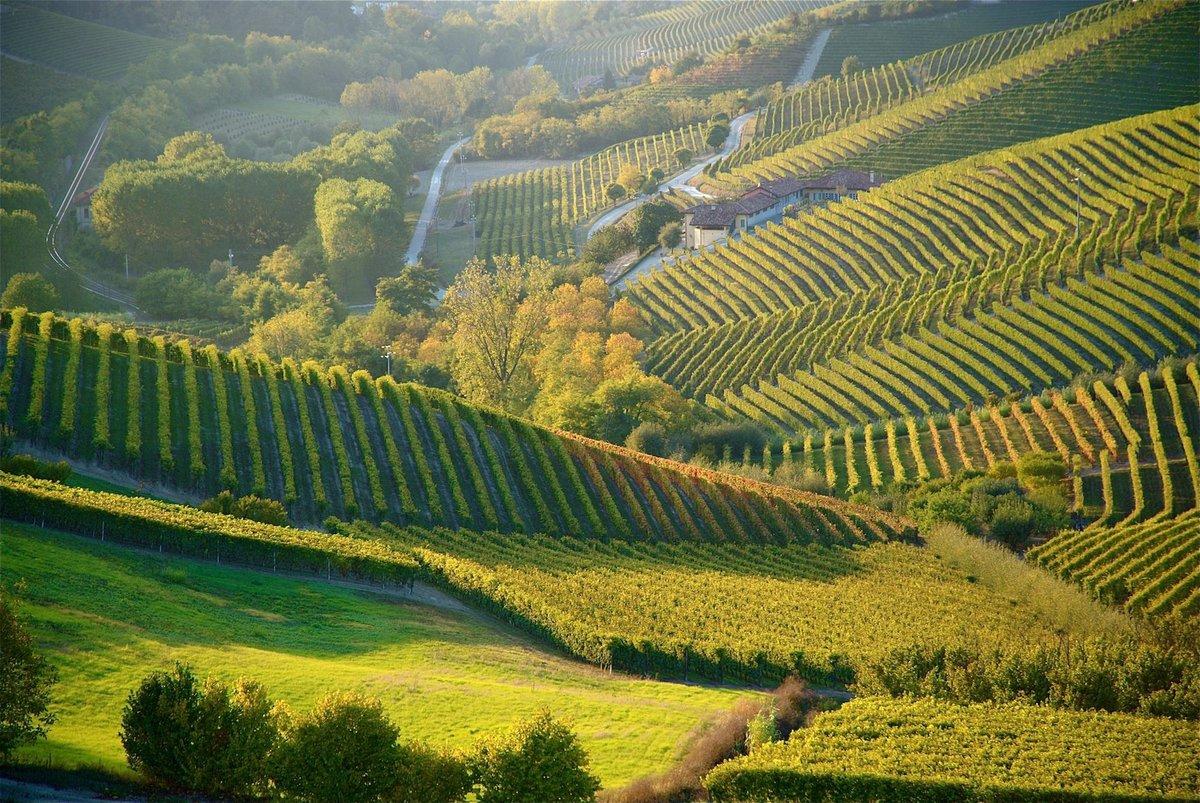 все хороши плантации в италии фото двадцать лет, поскольку