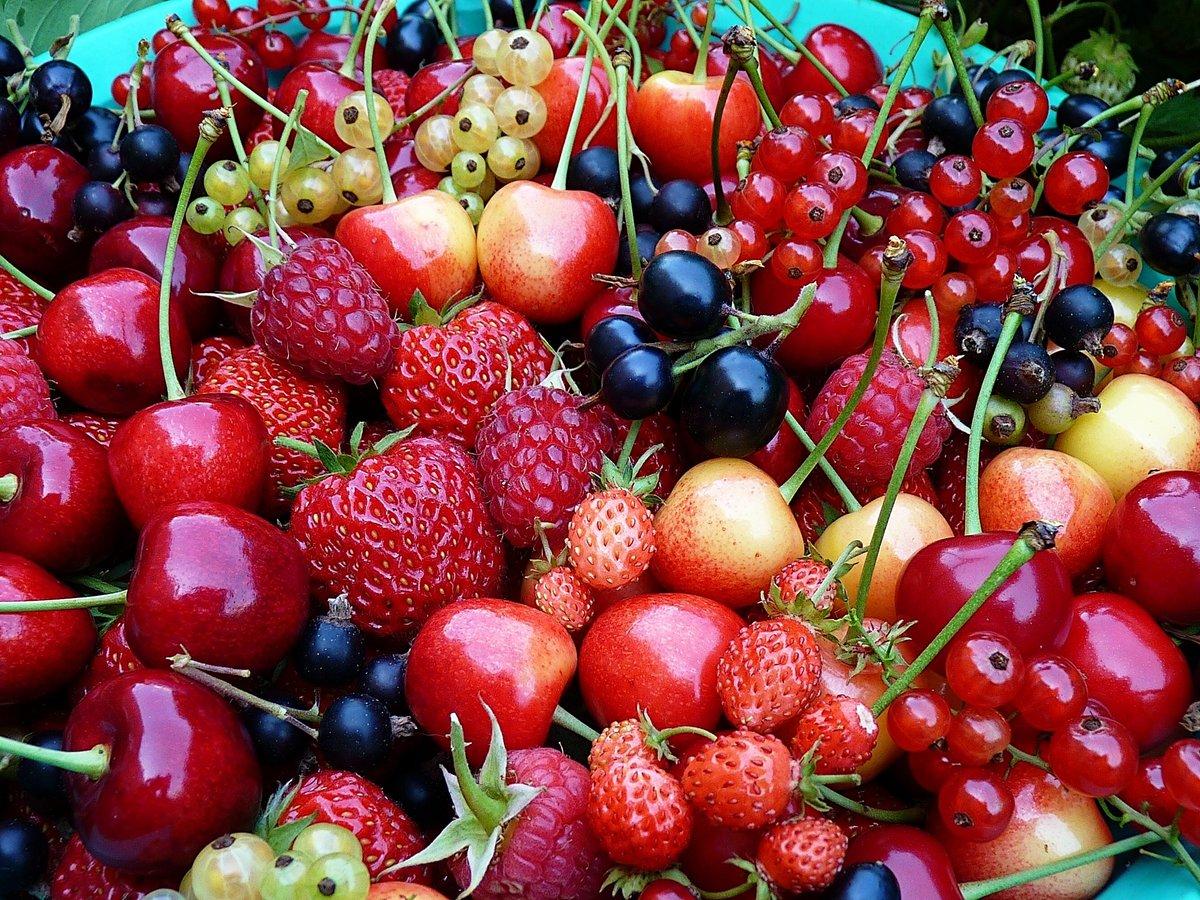 кубанские фрукты фото рисунок