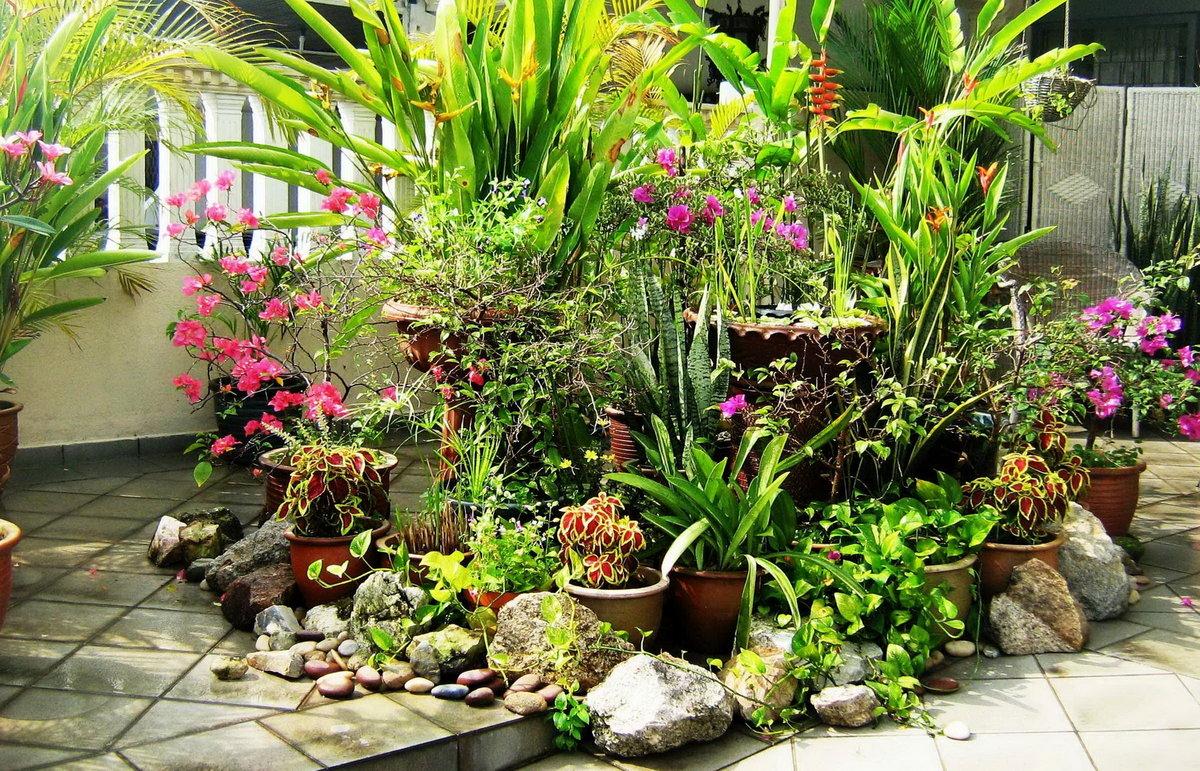 такие цветы для сада и комнатные фото связи этим