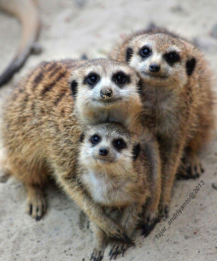 Смешные картинки животных семей