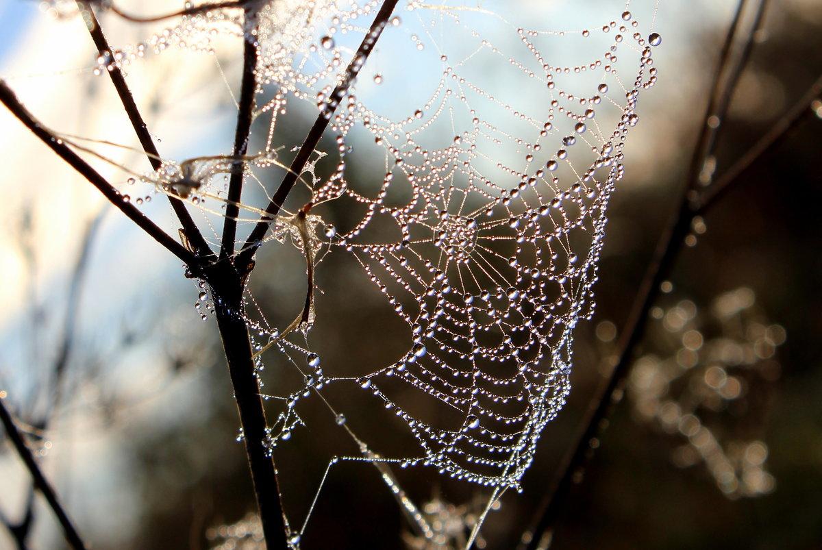 сочных упругих фото зимней паутинки том