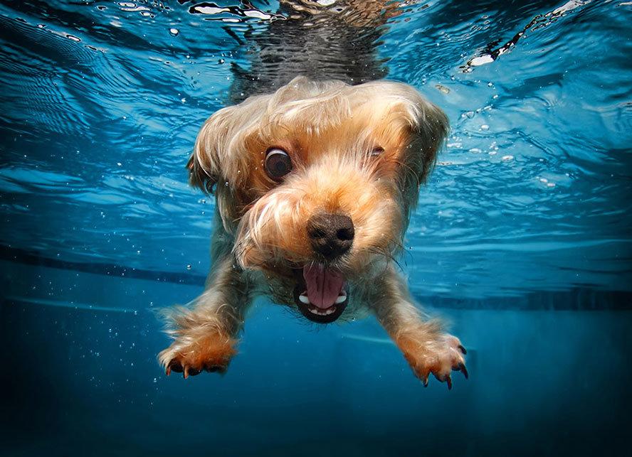 Вода смешные картинки