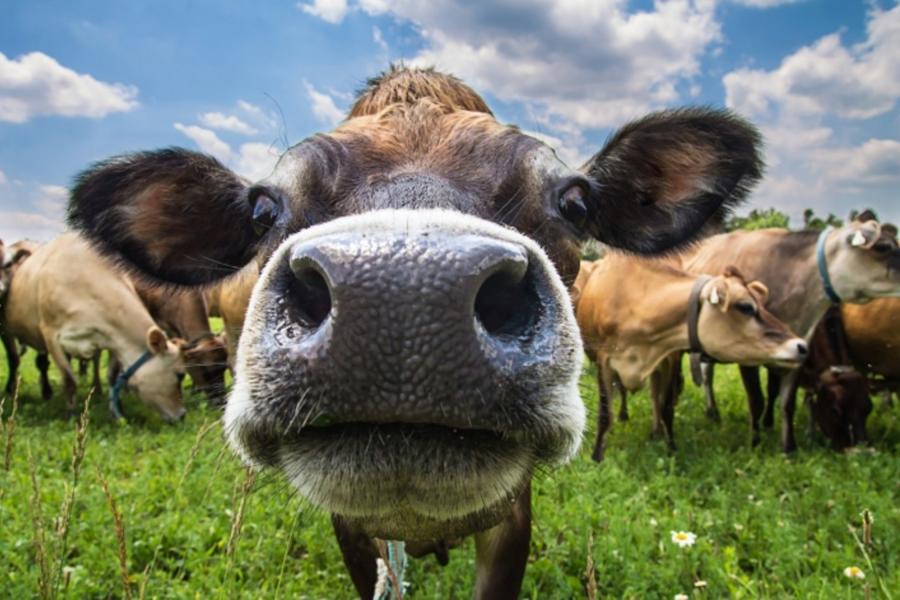Прикольные картинки с сельскохозяйственными животными, лет