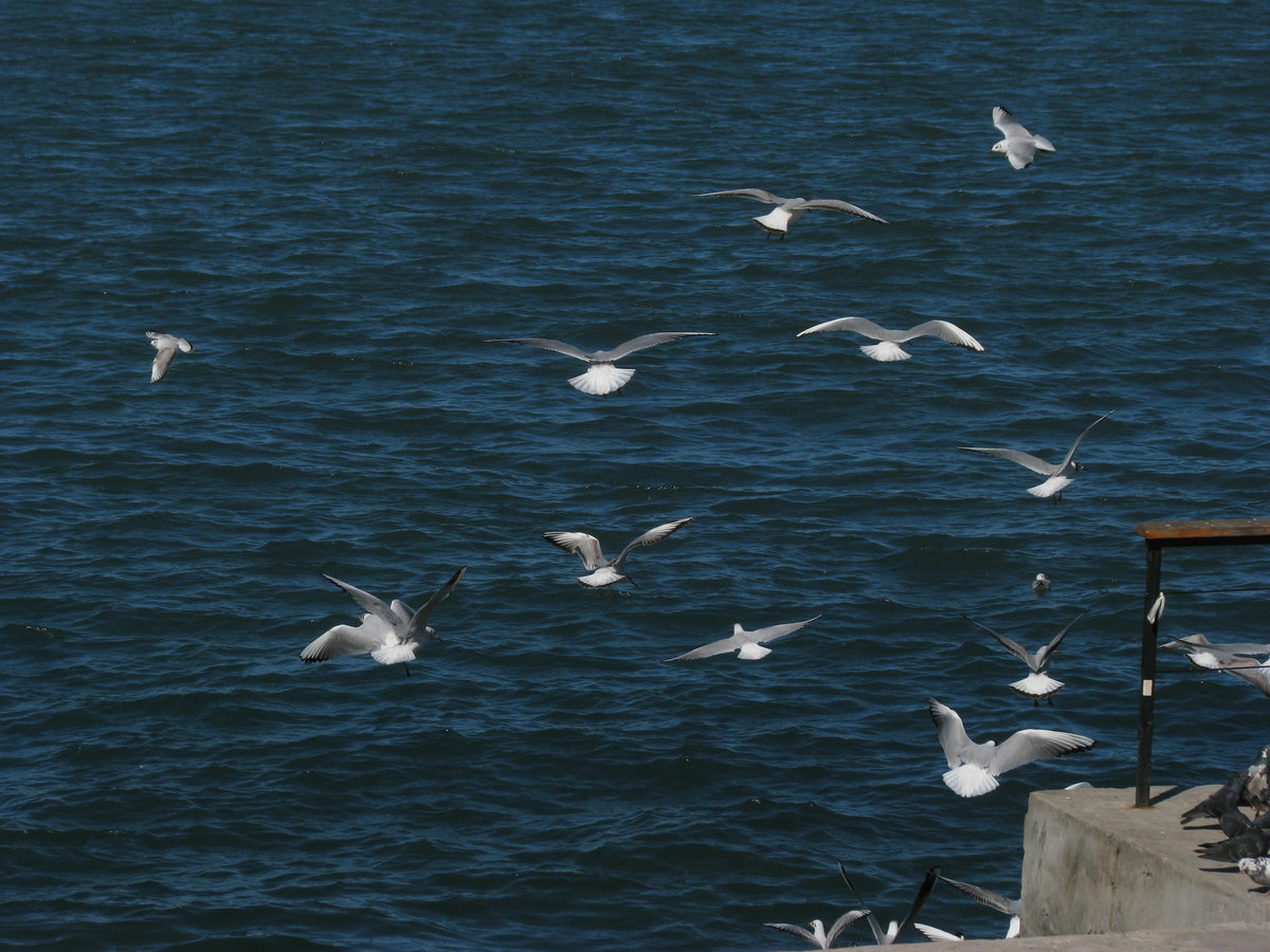 Гифка море и чайки