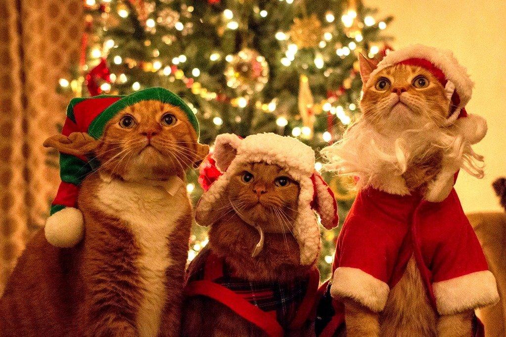 Картинка котов на новый год