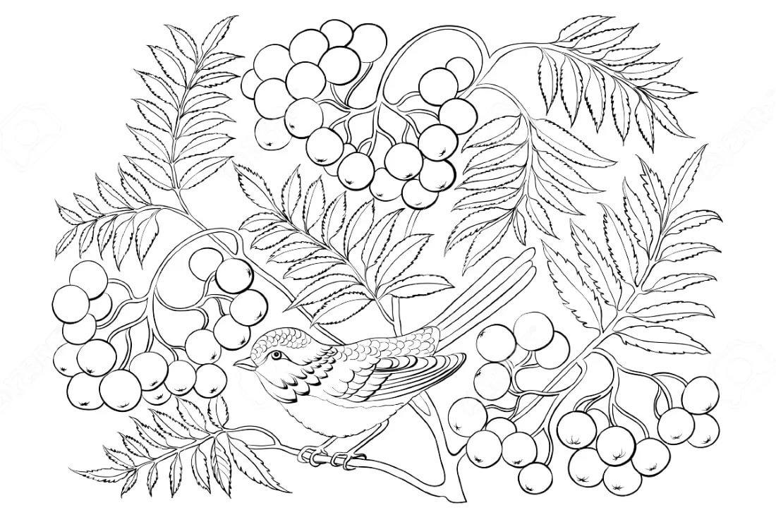 раскраска гроздь рябины распечатать себе