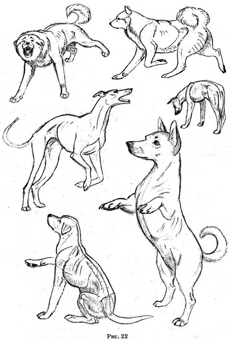 любом картинки рисунки в движении животные набросок имейте виду