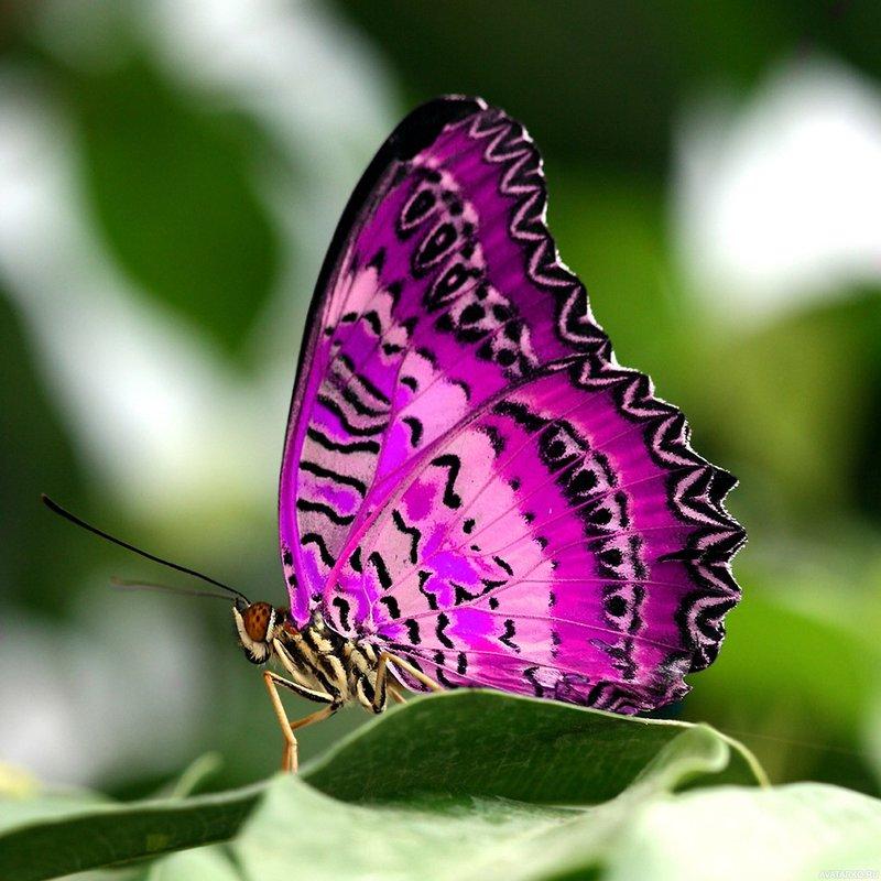 необычные картинки красивые на аву