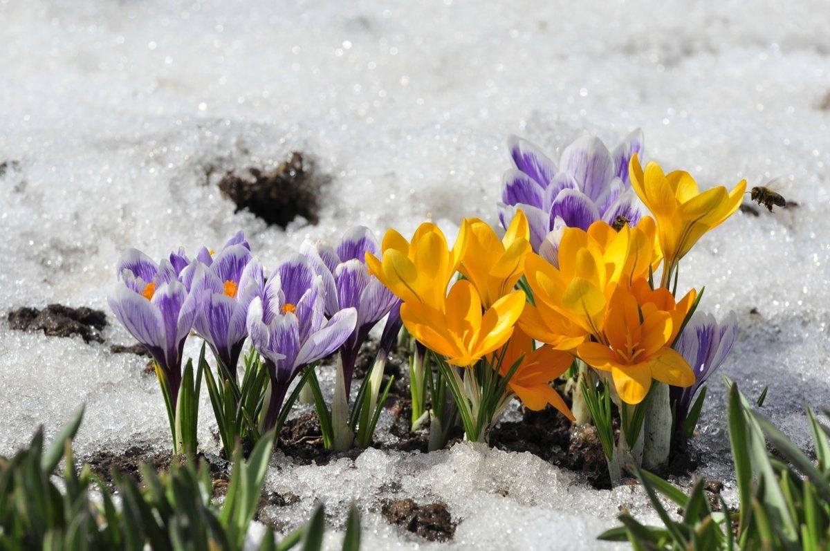 Открытка ранняя весна