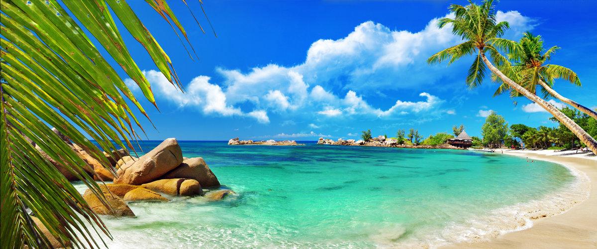 Пальма море картинки, картинки