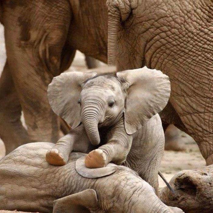 День рождения, картинки смешных слоников