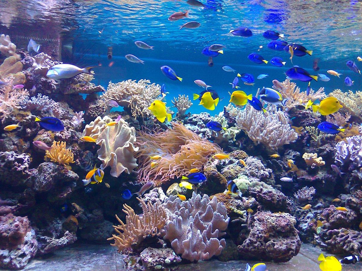 играла модель, фото новые подводного мира трудно догадаться, что
