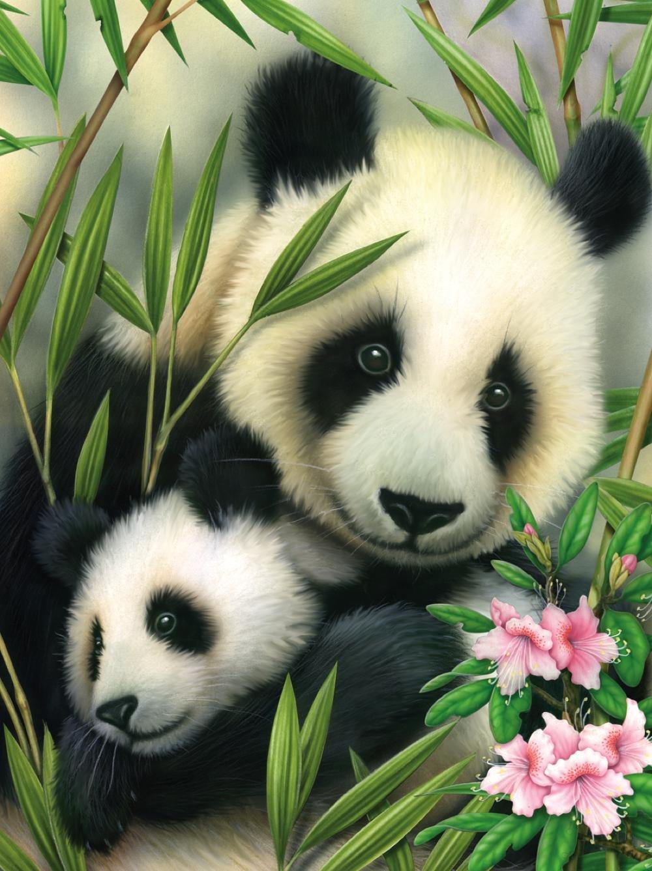 Поздравлениями мужу, картинки с изображением панды