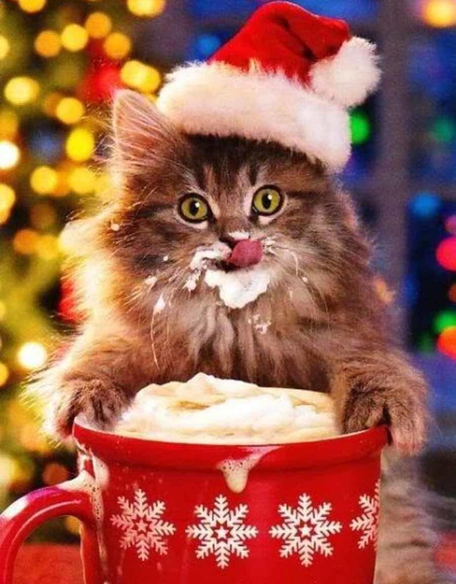 Новогодняя картинка с котами, днем
