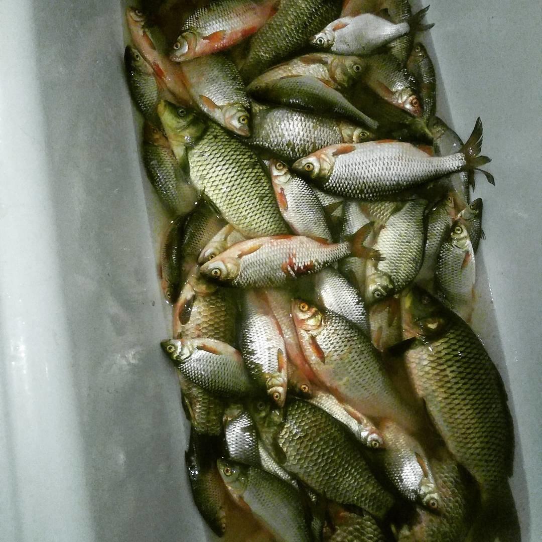 Гид по 16 рыбным местам недалеко от воронежа.