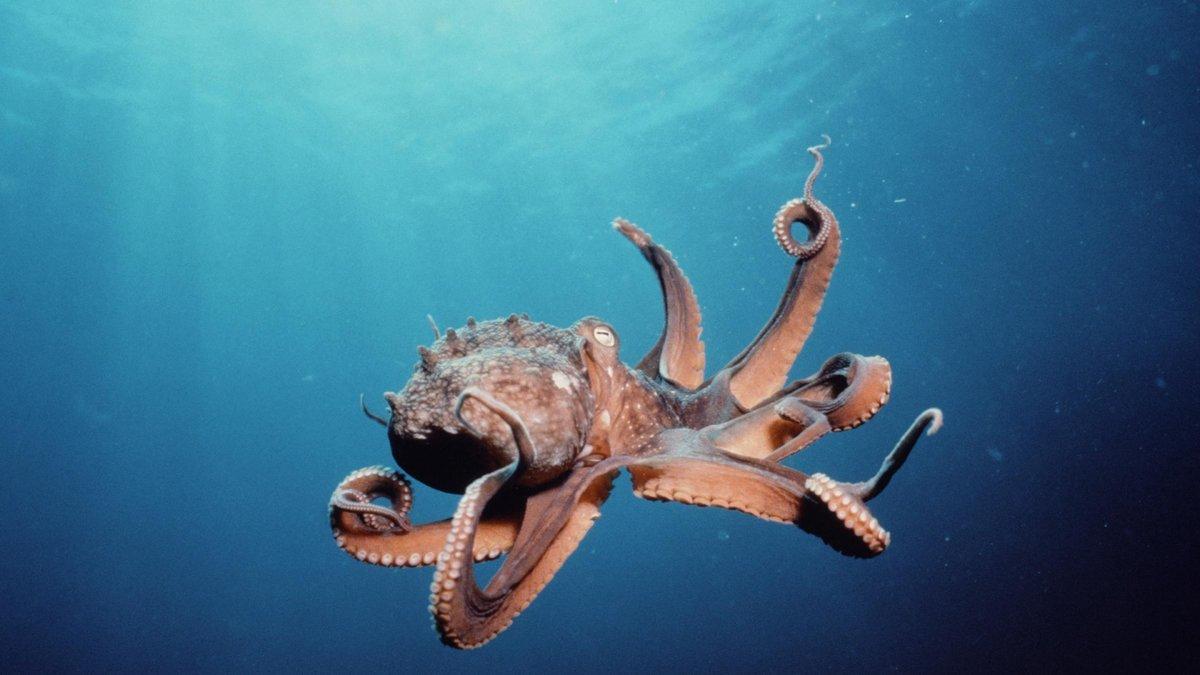 Подводный мир картинки на рабочий стол, поздравлением днем дошкольного