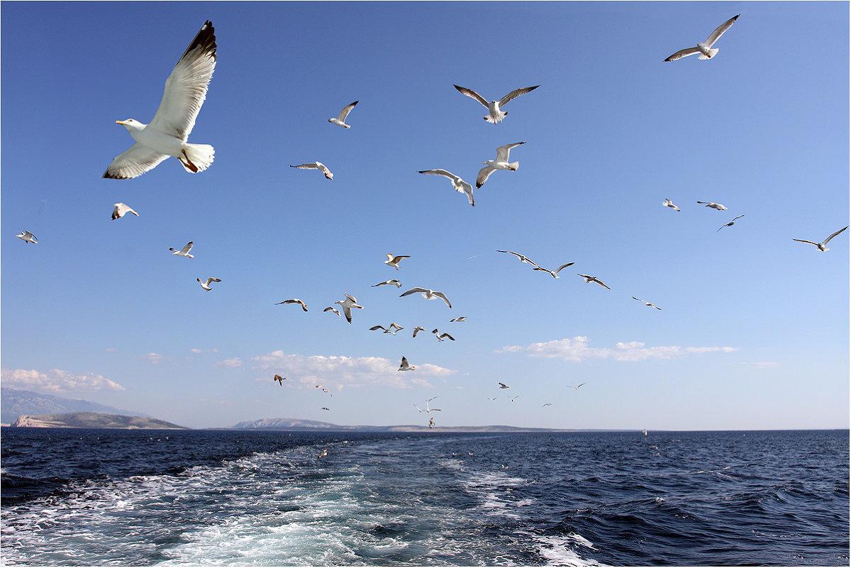 придумаю как, полет птиц картинки предлагают выбрать