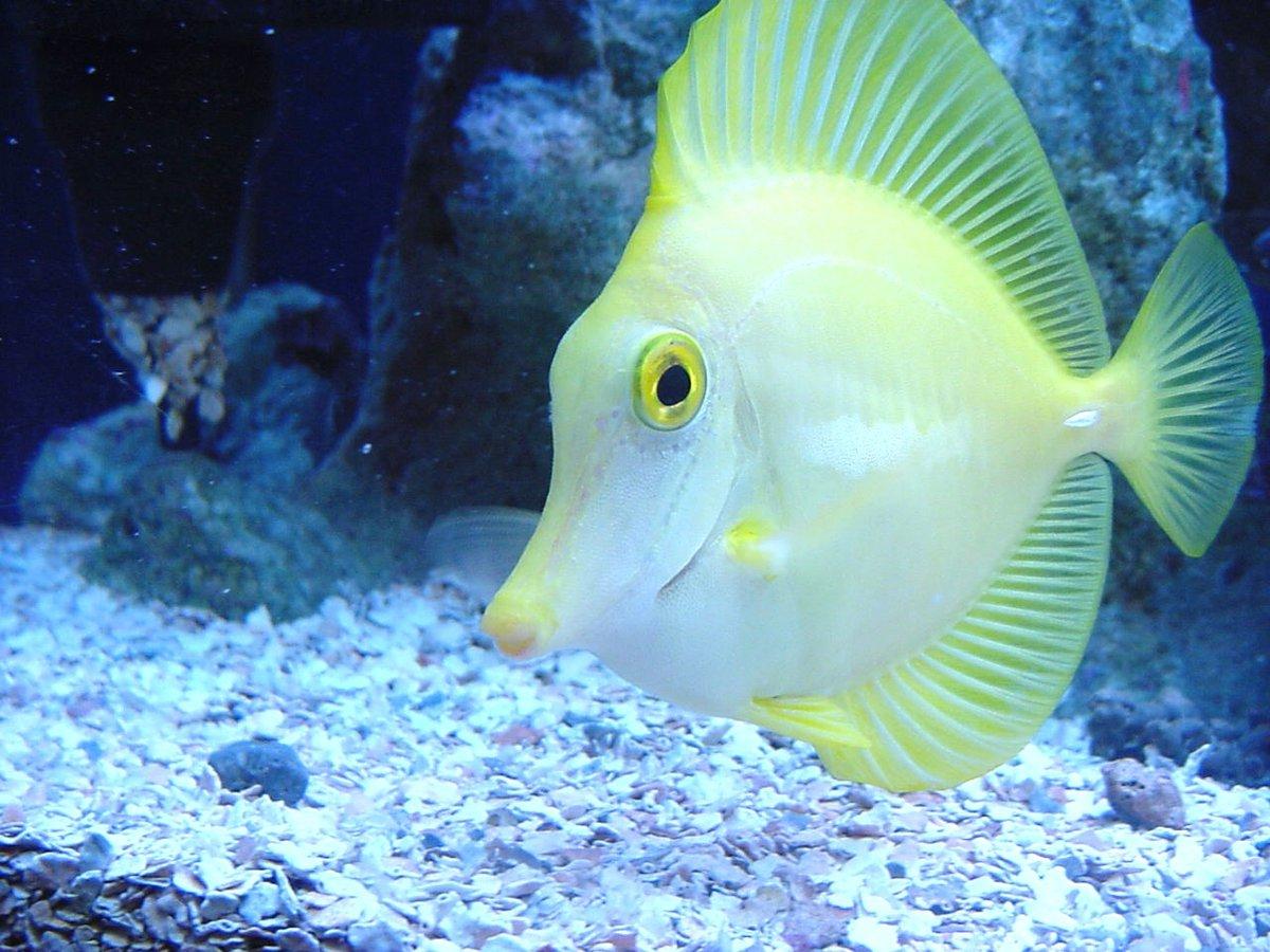 установки окон показать картинки рыб отношении
