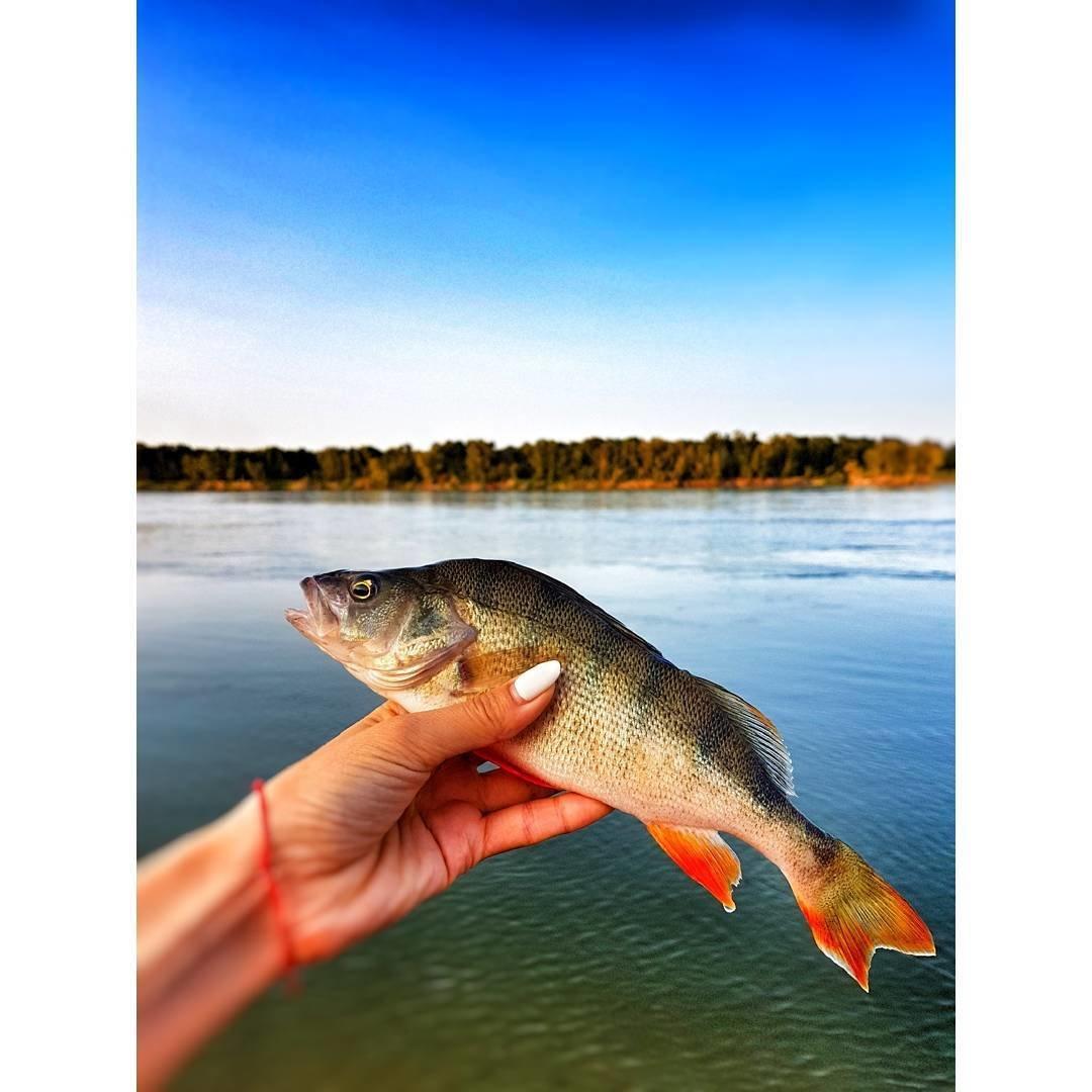 активатор клева fishhungry голодная рыба купить москва