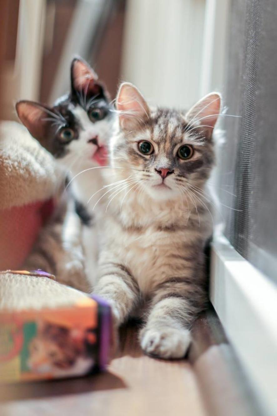 Фото прикольное картинки кот, прикольным
