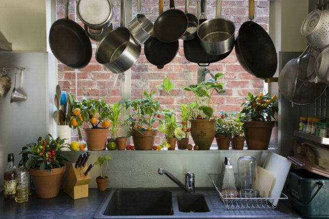 Комнатные растения в интерьере кухни - PRO Недвижимость