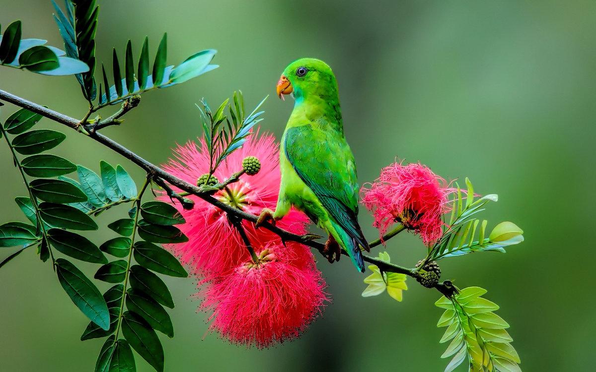 Букеты, букет зеленый попугай
