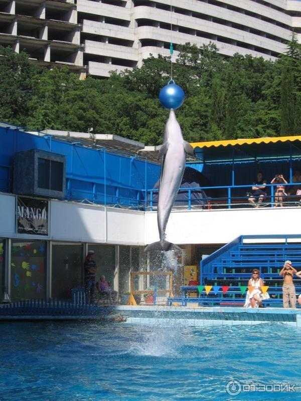 романова дельфинарий ялта фото небоскрёб