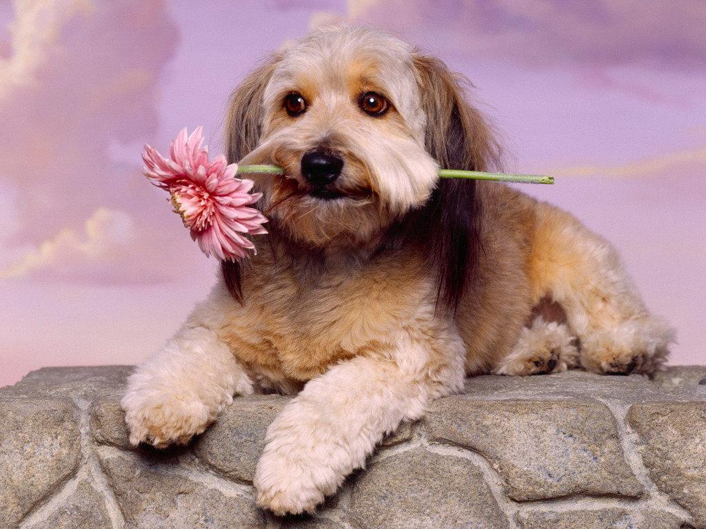 Доброго утра, открытка собачка с цветком