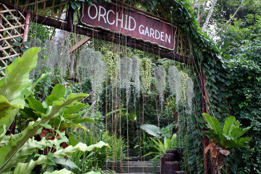 Пхукет сад орхидей фото отзывы