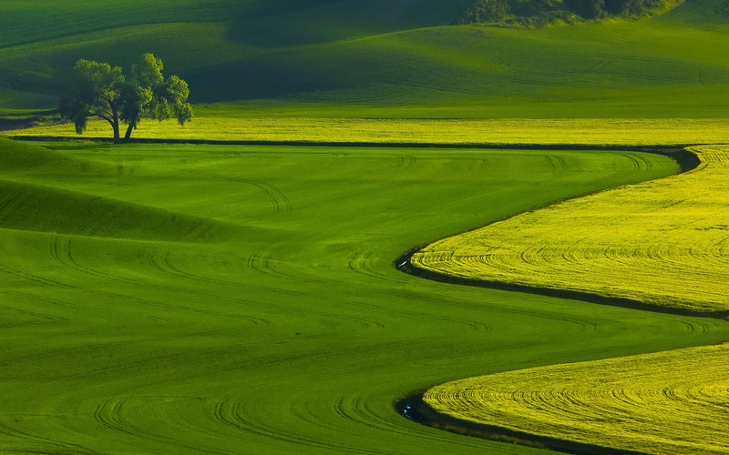 природа, дерево, трава, поля, Пейзаж