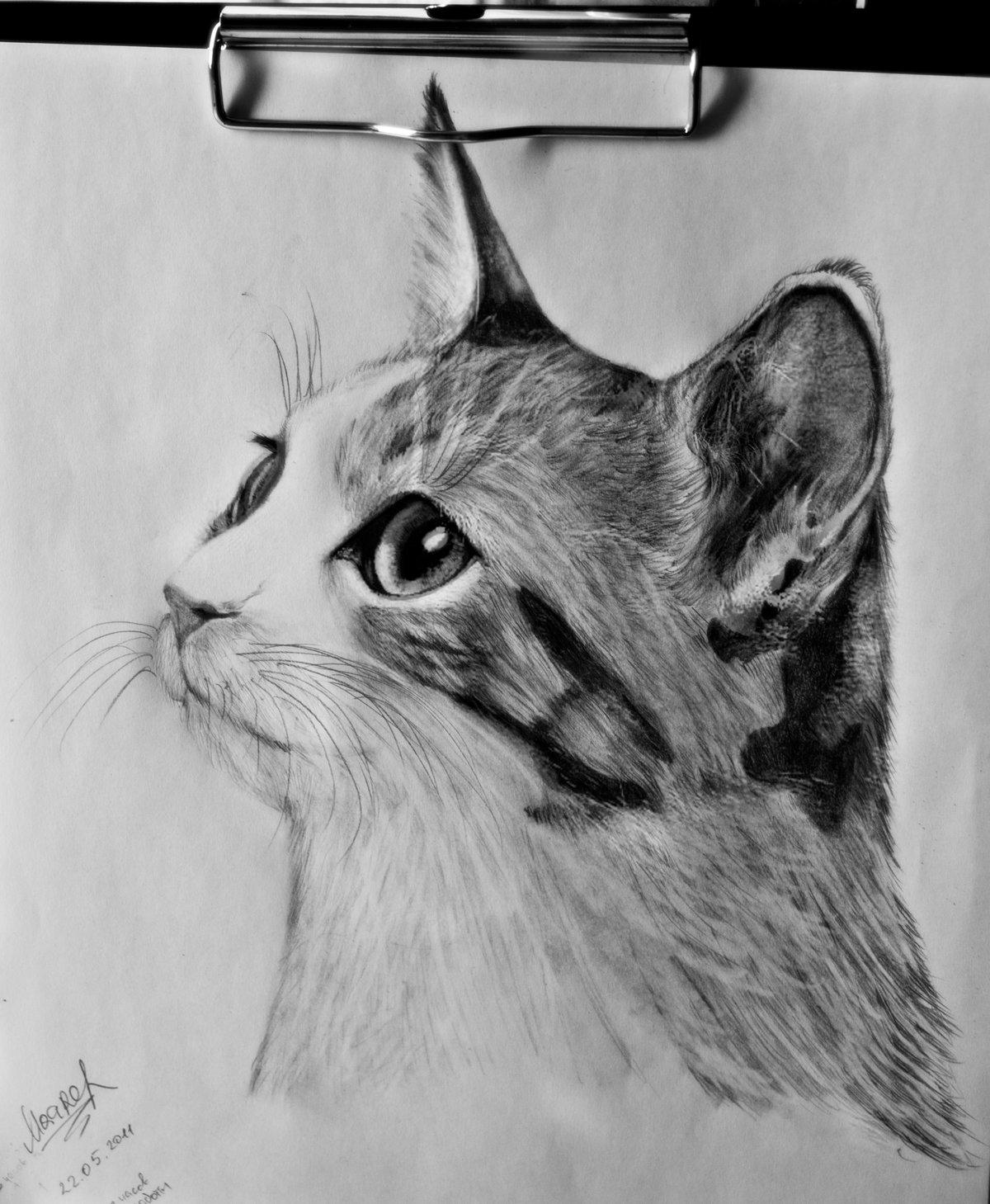 Дню матери, фото рисунок кота