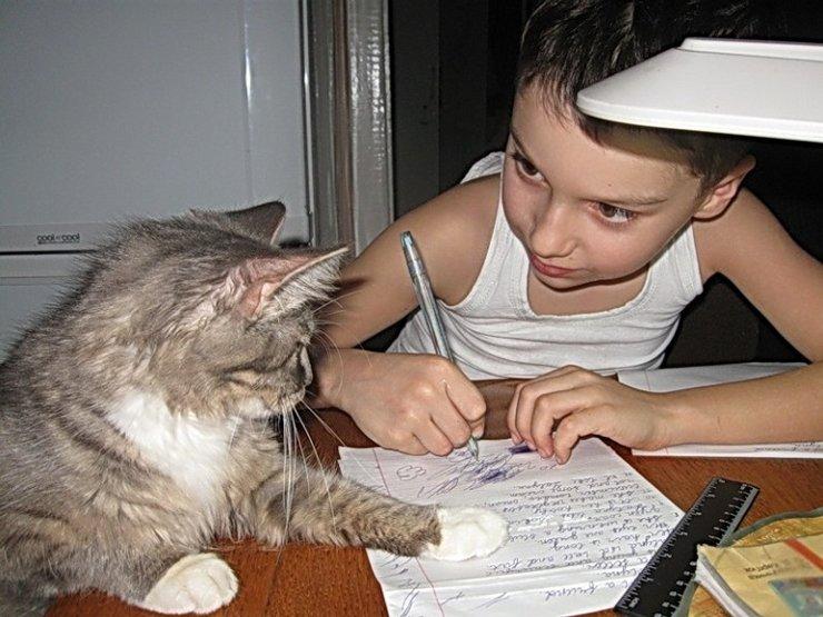 Днем, прикольные картинки про домашнюю работу