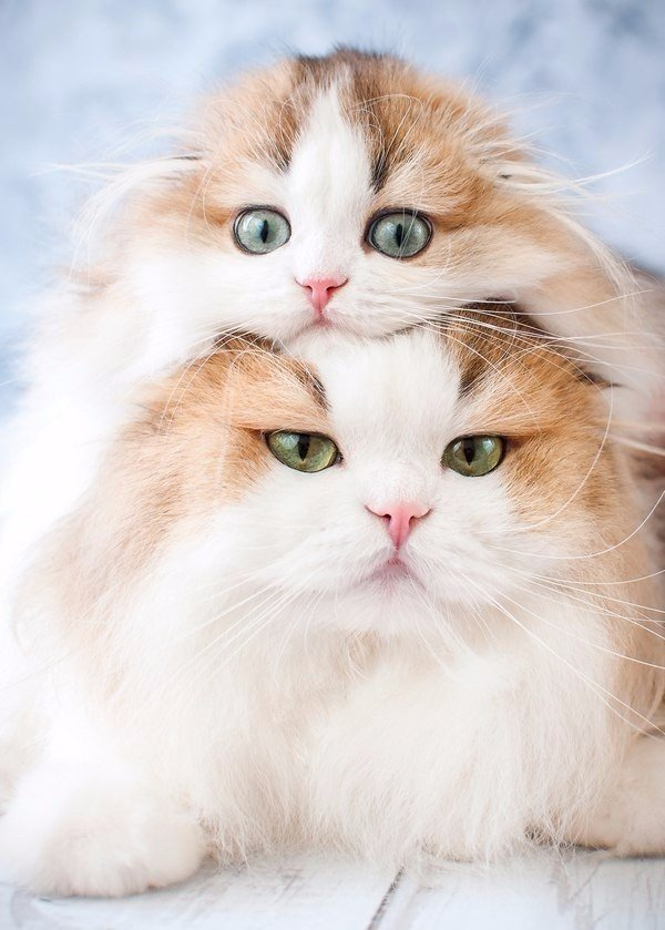 решил, что мимимишные котята картинки что недалеко
