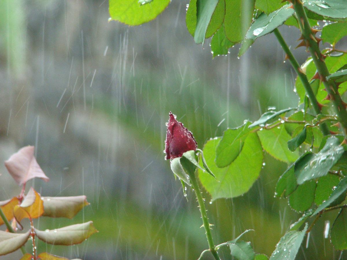 как гиф летний дождь технические средства периметральной