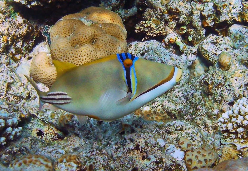 Рыбы красного моря фото с названиями эйлат